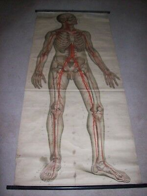 Antique Frohse Lifesize Anatomical Medical Chart Poster Circulatory System Rare