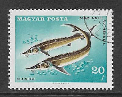 HUNGARY/MAGYAR POSTA USED STAMP - FISH - STERLET - 20f - 1967