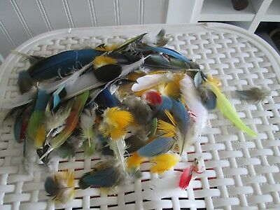 Parrot feathers macaws greys amazons lovely colours ideal crafts etc