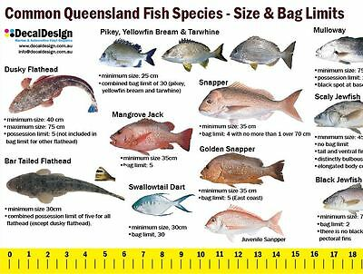 Queensland fishing guide decal 105cm long ruler sticker for boat transom #F033