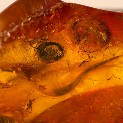 Fly Fossil Insect Inclusion - Natural Baltic Amber Stone 1.8g