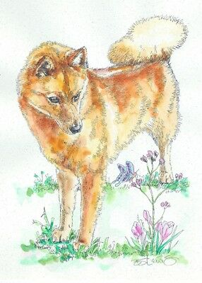FINNISH SPITZ Original Watercolor on Ink Print Matted 11x14 Ready to Frame