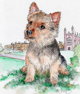 NORWICH TERRIER Original Watercolor on Ink Print Matted 11x14 Ready to Frame