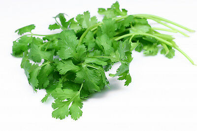 Organic Seeds Cilantro Coriander Coriandrum Sativum Vegetable  Herb(1,110 seeds)