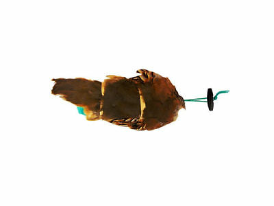 Sporting Saint Dog/Puppy French Partridge Pelt Dummy - Gundog - Retrieve