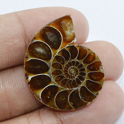 32.50 Cts.100% NATURAL DESIGNER AMMONITE FOSSIL FANCY CABOCHON LOOSE GEMSTONE