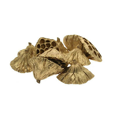 Gold Medium Sized Lotus Heads Dried Christmas Decorations Home Crafts SKU DF4065