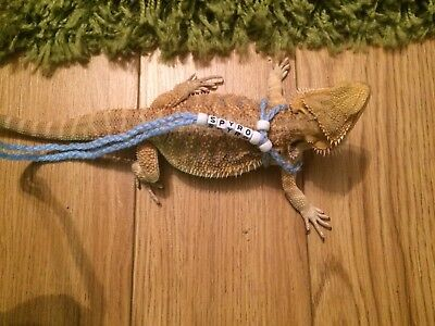 Handmade Acrylic Reptile Bearded Dragon , Rat Harness Personalised
