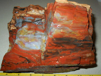 Arizona Rainbow Petrified Wood Picture Wood Rough  Gift/ Garden Decor 7 Lbs A36