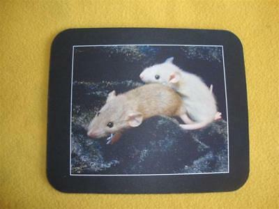 Baby Rat Photo Mousepad from Petrats