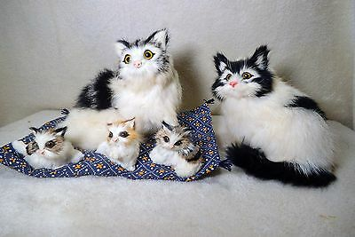 cat family mom dad and 3 kittens