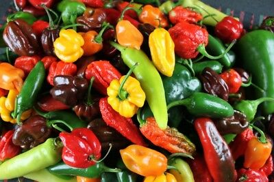 Chili peppers mix 50 seeds