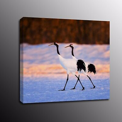 Animals Canvas Print Picture Swan Home Decor Oil Painting Wall Art Poster