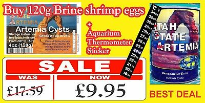 USA ARTEMIA EGGS BRINE SHRIMP EGGS Fast result / FRESH & DRY / UK ONLY