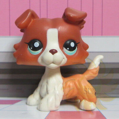 Littlest Pet Shop Brown Collie Dog Puppy Blue Eyes Figure LPS Rare Toy #1542 T1