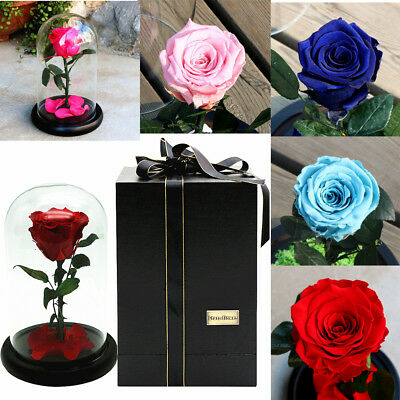 Luxury Beauty And The Beast Inspired Light Up Enchanted Rose In Dome Centrepiece