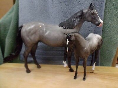 Peter Stone  ISH CATCH ME IF YOU CAN & weanling CLOUDS IN THE SKY filly glossyx2