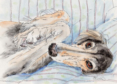 SALUKI REPOSE Original Watercolor on Ink Print Matted 11x14 Ready to Frame