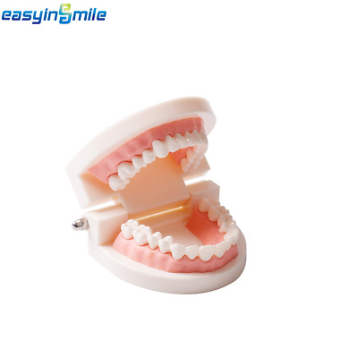 1xEASYINSMILE Dental Standard Typodont Demonstration Teaching Adult Tooth Model