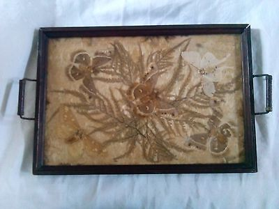 Antique Aesthetic Movement Period Frame Taxidermy Mounted  Butterflies Tray