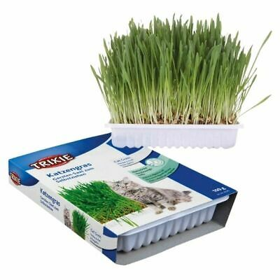 Trixie House Cat Grass Seeds - 100g Bowl Bag Grow Your Own Kitten Barley Seed