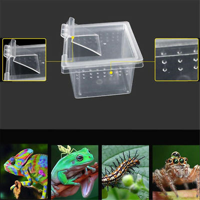 Clear Plastic Reptile Insect Box Spider Snake Transport Breeding Feeding Case