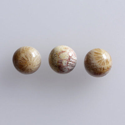 24MM Round Shape, Fossil Coral Calibrated Cabochons AG-236