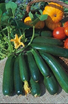 (292) 'KINGS' QUALITY courgette zucchini - 80 seeds- Vegetable