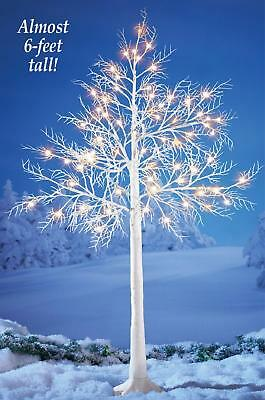 """Winter Sparkling White Light & Glitter Covered White Branches Outdoor Tree 68""""H"""