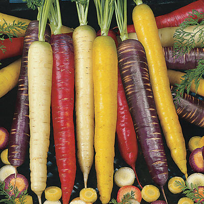 500 Pcs Sweet Carrot seeds Mix 9 Color Vegetable Rare Organic Russian Heirloom