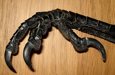 1 genuine Icelandic beautiful raven foot,Claw(Common raven)Taxidermy,Souvenirs