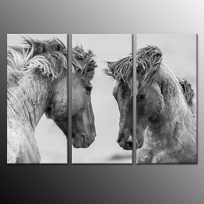 HD Canvas Animal Print Modern Home Decor Wall Art Painting Horses Picture 3pcs