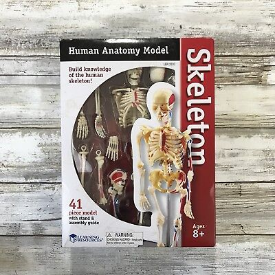 Human Anatomy Model Skeleton 40 Piece Model With Stand And Assembly Guide