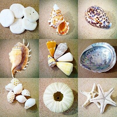 6x Shells, Starfish and Sea Urchins x6 - Various types and colours