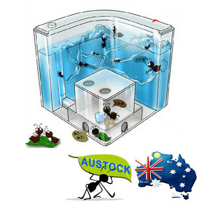 Ant Home Farm Science Natural Ecological Insects Live World Kids Educational AU