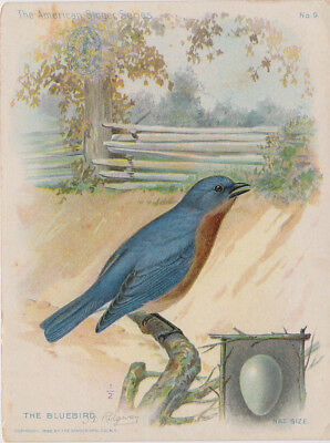 Antique Advertising Card SINGER SEWING MACHINES Bluebird American Singer Series