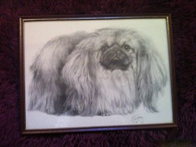 M Sibley signed framed print of Pekinese dog pencil drawing