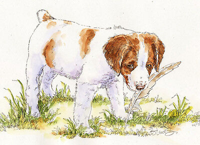 BRITTANY w FEATHER Original Watercolor on Ink Print Matted 11x14 Ready to Frame