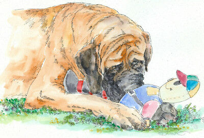 MASTIFF w DOLL Original Watercolor on Ink Print Matted 11x14 Ready to Frame