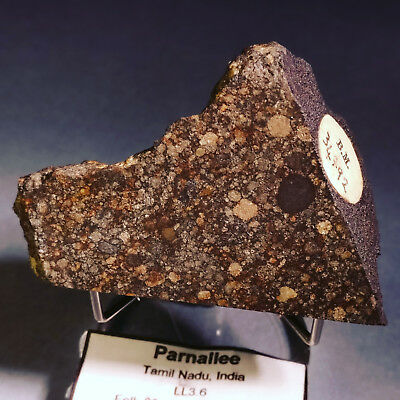 37 g Parnallee British Museum Provenance Witnessed Fall Meteorite from INDIA