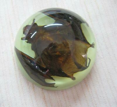 Bat insect noctiluc amber embedding specimen collection crafts paperweight resin