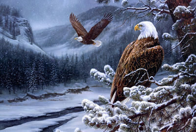 Hd  print Animal The eagle in the snow decor  art print canvas 8x12'