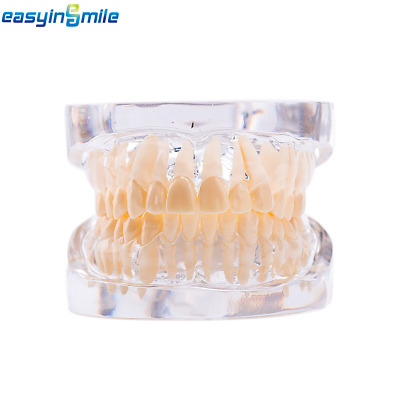 EASYINSMILE Adult Standard Typodont Teach dental Demonstration Teeth Study Model