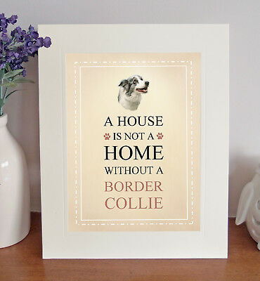 Border Collie (Blue Merle) 8 x 10 A HOUSE IS NOT A HOME Picture 10x8 Dog Print