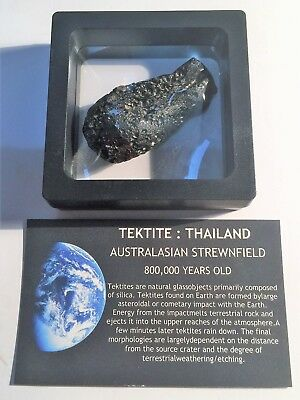 """RARE"" 30.3 Gram TEKTITE Museum Quality with stand and label"