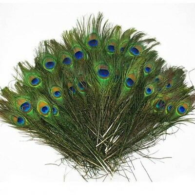 50pcs lots Real Natural Peacock Tail Eyes Feathers 8-12 Inches  ZX