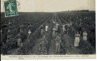 (S-24646) FRANCE - 37 - VOUVRAY CPA      N.D.  ed.