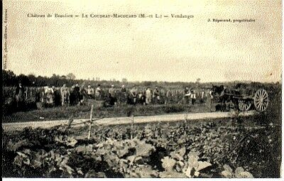 (S-42504) France - 49 - Le Coudray Macouard Cpa  (S-42504)