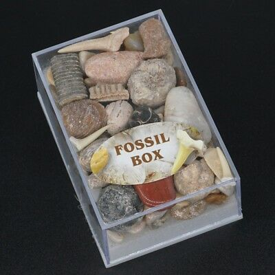 A Box Of Natural Fossil Crystal Mineral Energy Healing Collection Of Gifts