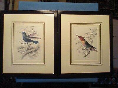 Pair of Professionally Framed and Matted Colorful Bird Prints.